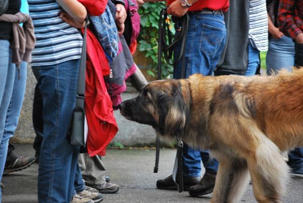 Beziehungsprobleme in der Mensch-Hund-Beziehung