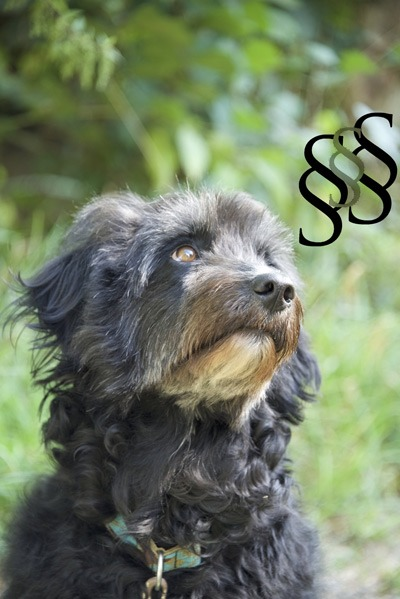 Rechtskunde für Hundeerziehungsberater*innen