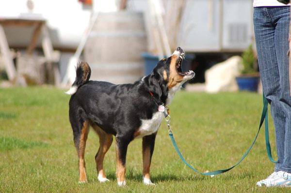 Zur methodischen Diagnose von Verhaltensproblemen des Hundes