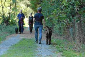 Institut Hundeerziehungsberatung: Beobachtung Hundeschulalltag