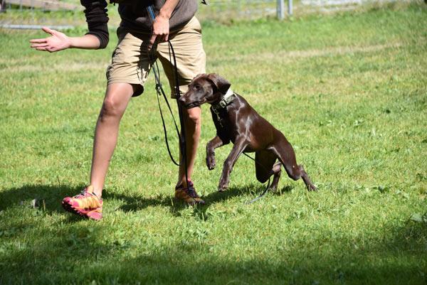 Institut für Hundeerziehungsberatung: Pädagogik beim Hund