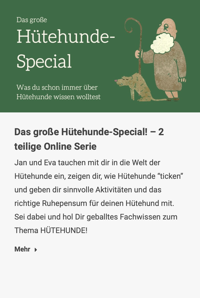 Das große Hütehunde-Special